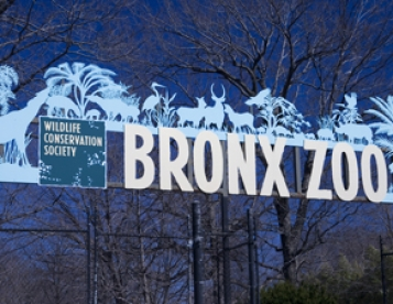 August 25th Bronx Zoo